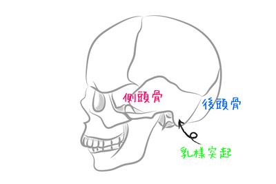 耳への愛撫で押さえるべきポイントは、『耳裏の骨』〜『頭』