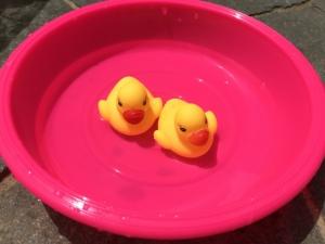 洗面器の中の2羽のアヒル